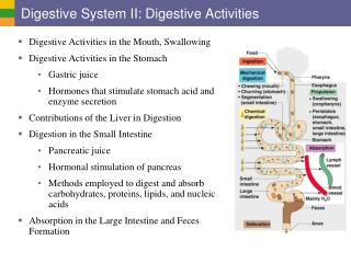 Digestive System II: Digestive Activities