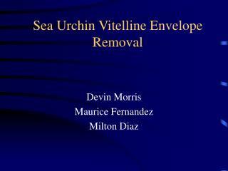 Sea Urchin Vitelline Envelope  Removal