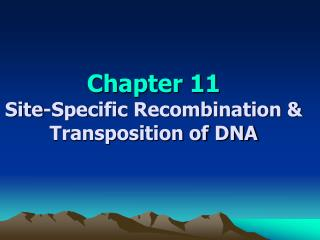 Chapter 11 Site-Specific Recombination & Transposition of DNA