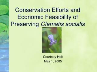 Conservation Efforts and Economic Feasibility of Preserving  Clematis socialis