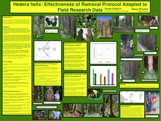 Hedera helix: Effectiveness of Removal Protocol Adapted to Field Research Data