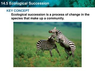 KEY CONCEPT  Ecological succession is a process of change in the species that make up a community.