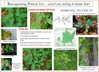 Recognizing Poison Ivy… aren't you itching to know how?
