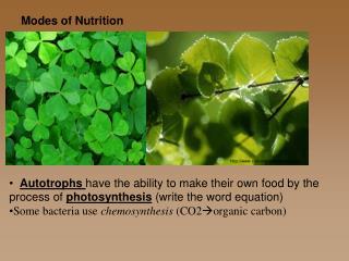 sivb/images/plant.jpg