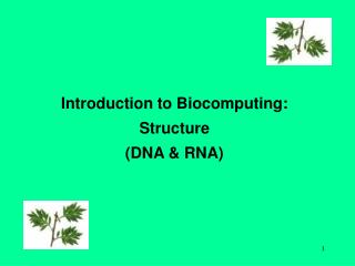 Introduction to Biocomputing: Structure (DNA & RNA)