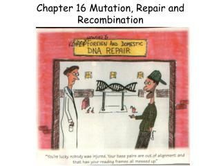 Chapter 16 Mutation, Repair and Recombination