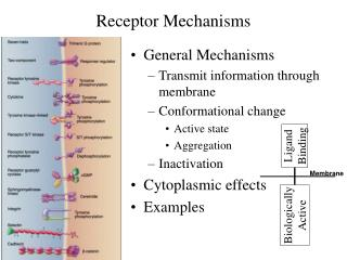Receptor Mechanisms