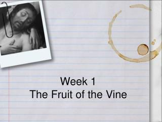 Week 1 The Fruit of the Vine