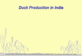 Duck Production in India