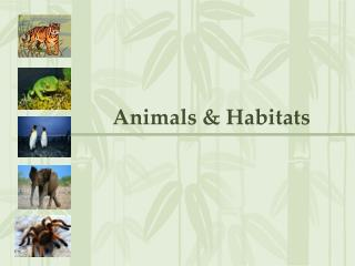 Animals & Habitats