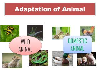 Adaptation of Animal