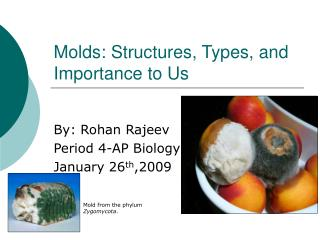 Molds: Structures, Types, and Importance to Us