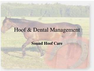 Hoof & Dental Management