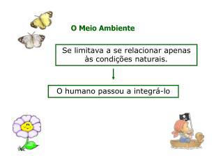 O Meio Ambiente