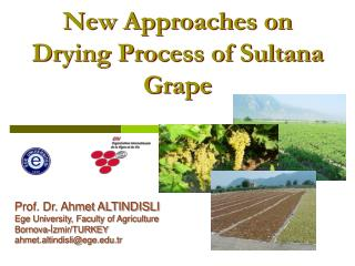 New Approaches on Drying Process of Sultana Grape