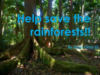 Help save the rainforests!!