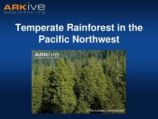 Temperate Rainforest in the Pacific Northwest
