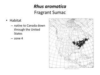 Rhus aromatica Fragrant Sumac