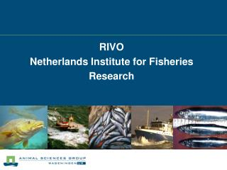 RIVO  Netherlands Institute for Fisheries Research