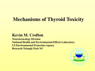 Mechanisms of Thyroid Toxicity