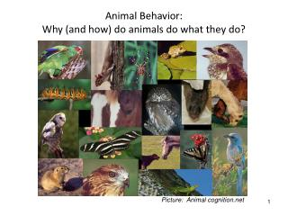 Animal Behavior:   Why and how do animals do what they do