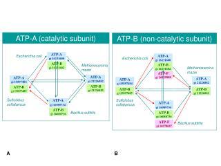 ATP-F gi 16129888