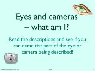 Eyes and cameras – what am I?