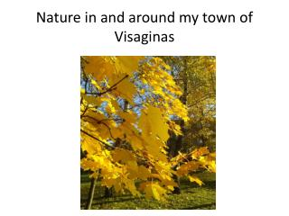 Nature in and around my town of  Visaginas