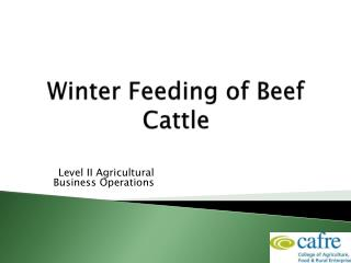 Winter Feeding of Beef Cattle