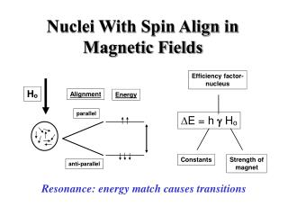 Nuclei With Spin Align in Magnetic Fields