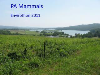 PA Mammals