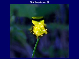 ECM Agenda and RE