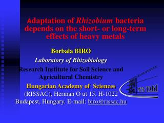 A daptation of  Rhizobium  bacteria depends on the short- or long-term effects of heavy metals