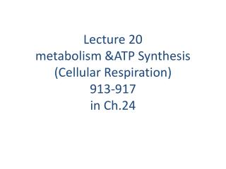 Lecture 20 metabolism &ATP Synthesis (Cellular Respiration) 913-917 in Ch.24