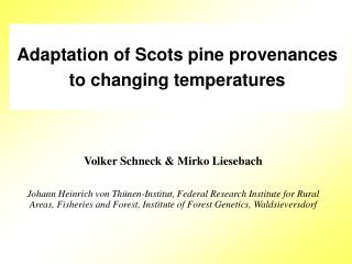 Adaptation of Scots pine provenances to changing temperatures