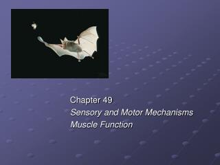 Chapter 49 Sensory and Motor Mechanisms Muscle Function