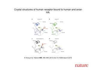 X Xiong  et al. Nature  499 , 496-499 (2013)  doi:10.1038/nature12372