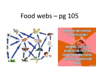 Food webs �  pg  105