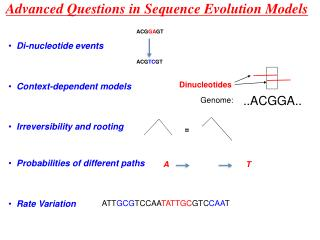 Advanced Questions in Sequence Evolution Models