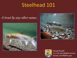 Steelhead 101