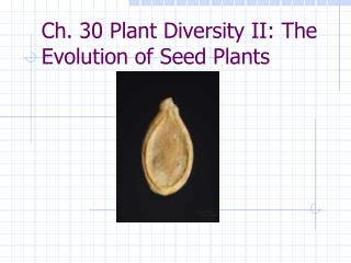 Ch. 30 Plant Diversity II: The Evolution of Seed Plants
