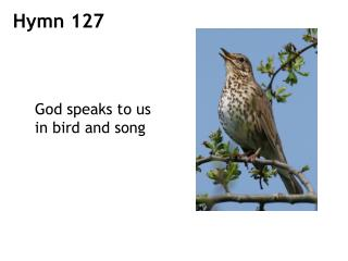 God speaks to us in bird and song