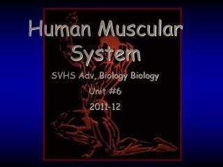 Human Muscular System SVHS Adv, Biology Biology Unit #6 2011-12