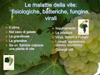 Le malattie della vite: fisiologiche, batteriche, fungine, virali