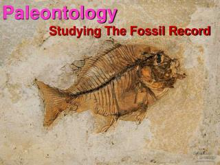 Paleontology Studying The Fossil Record