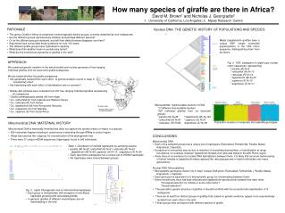 How many species of giraffe are there in Africa? David M. Brown 1  and Nicholas J. Georgiadis 2