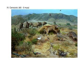 IV. Cenozoic (65 - 0 mya)