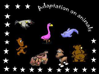 Adaptation on animals
