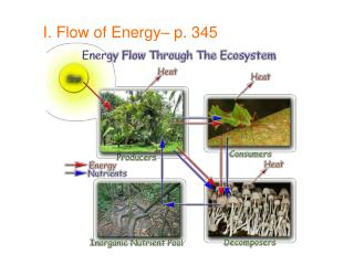 I. Flow of Energy– p. 345