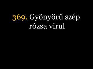 369.  Gyönyörű szép rózsa virul